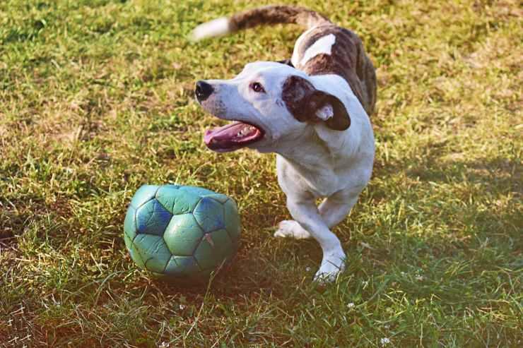 palla sgonfia cane