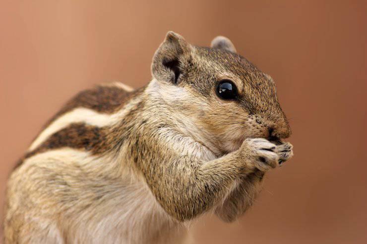 scoiattolo ghiande alberi