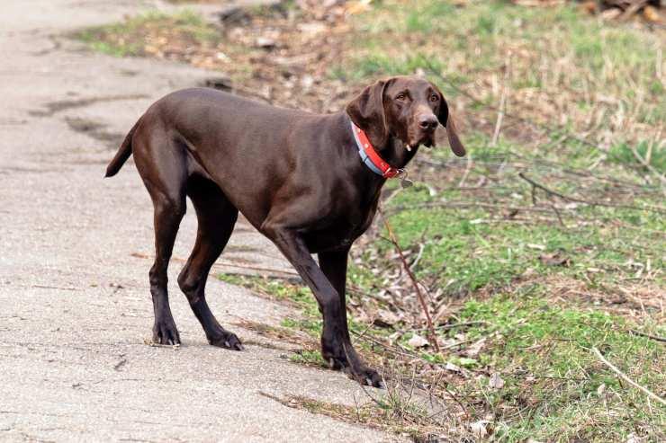 domande randagio cane
