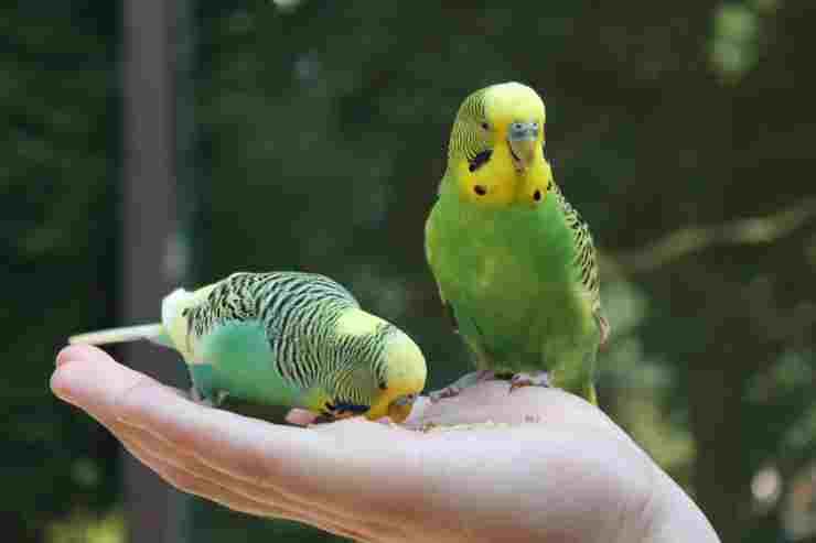 I semi per i pappagalli (Foto Pixabay)
