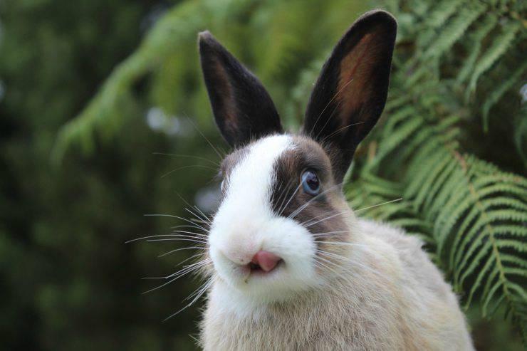 Rogna nel coniglio