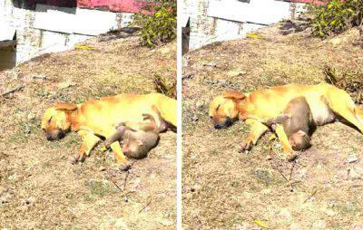 cane adotta cucciolo scimmia