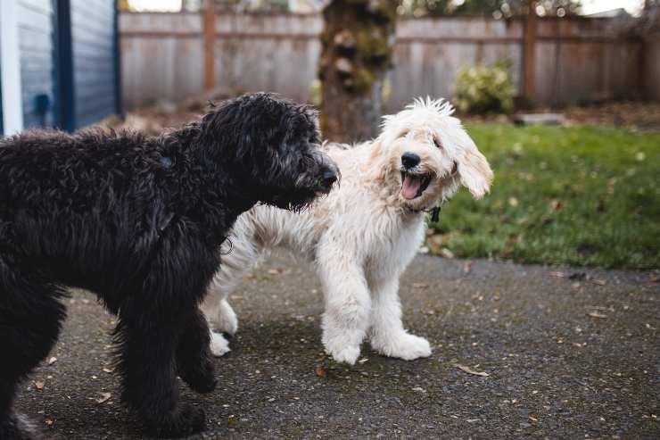comportamenti strani del cane