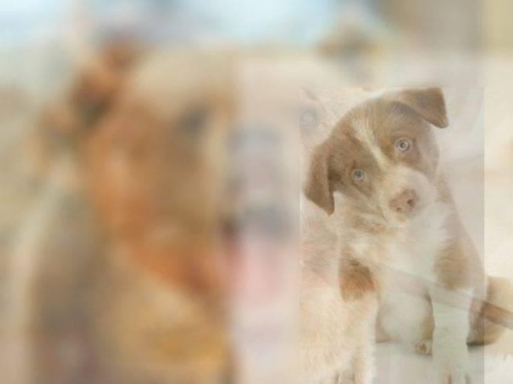 risultato test visivo cane