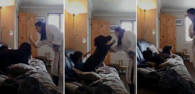 cane difende bambino