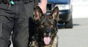 Razze di cani poliziotto