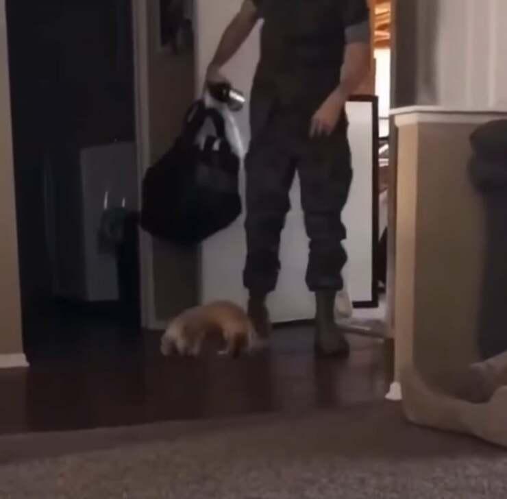 il cane e il soldato