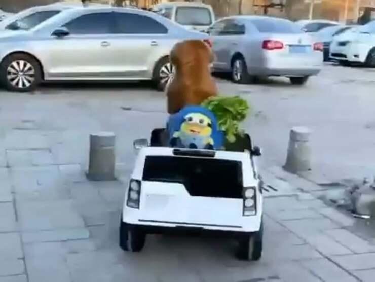 cane fa la spesa