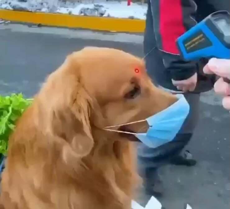 Il cane dell'influencer che fa la spesa