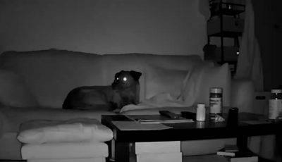 cane sente terremoto
