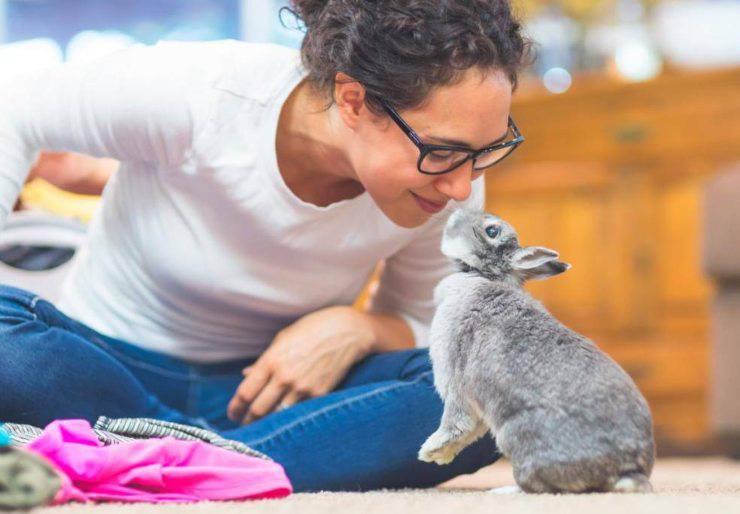 carattere del coniglio