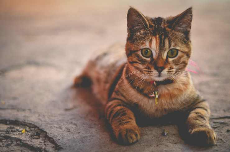 Gatto in allerta (Foto Pixabay)