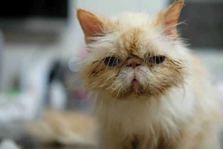 Vaccinazioni per gatti