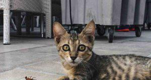I sensi speciali del gatto