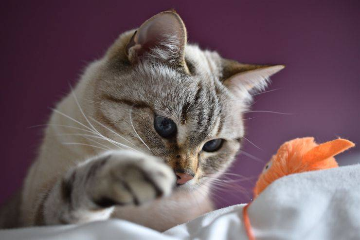 test intelligenza gatti