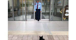 gatti cercano entrare museo