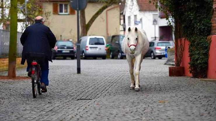 cavallo passeggia da solo