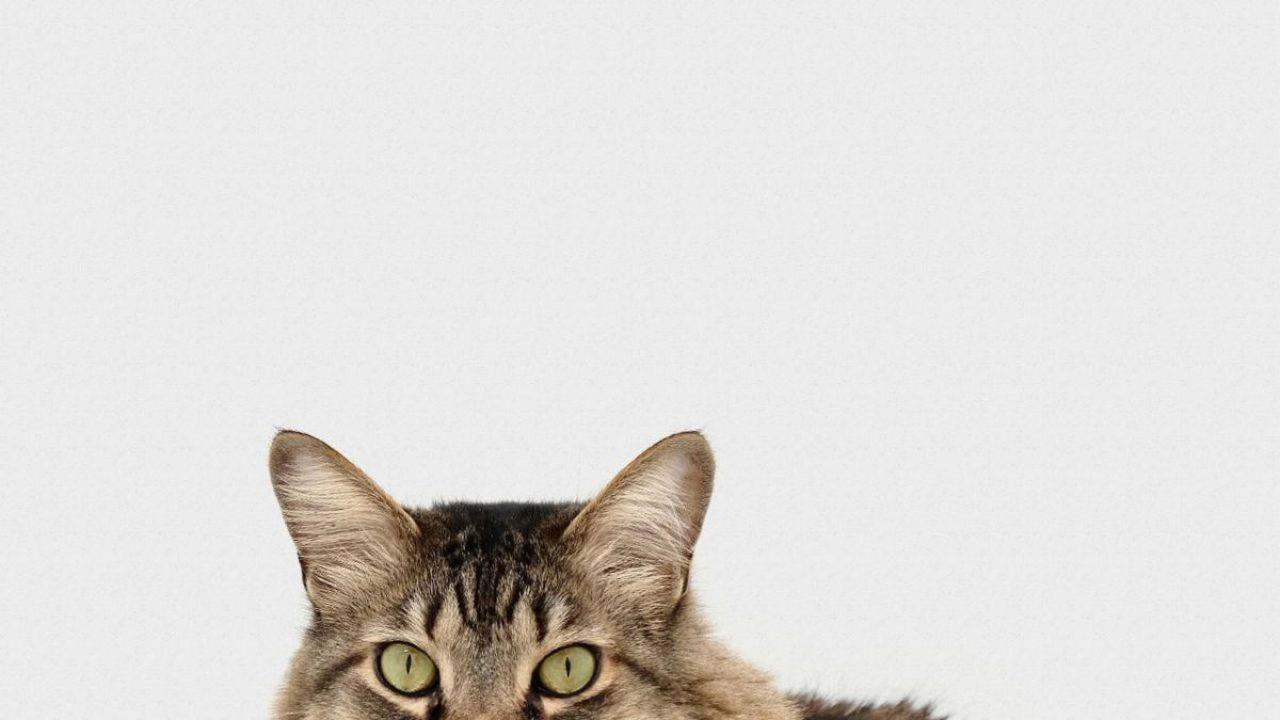 La Mia Città Ideale Test a quale gatto assomigli? il test per trovare la tua anima