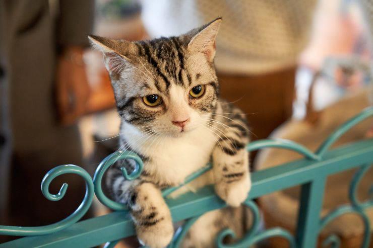 errori con il gatto