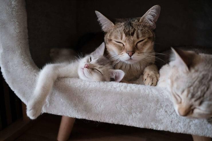 quarantena con gatto