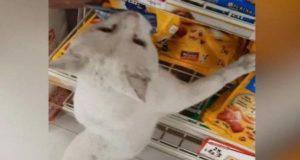 gatto passanti comprare cibo
