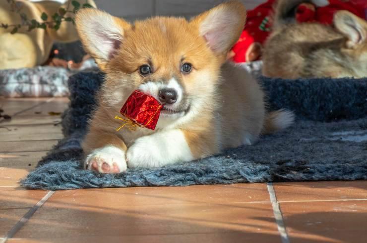 cane e oggetto rosso