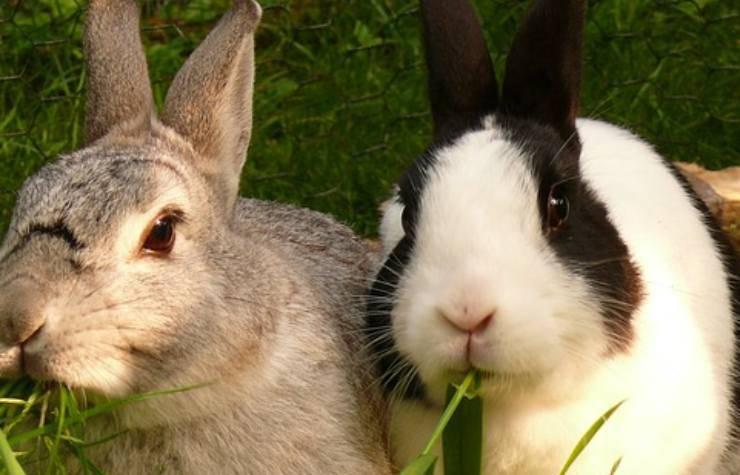 cosa puo e cosa non puo mangiare il coniglio