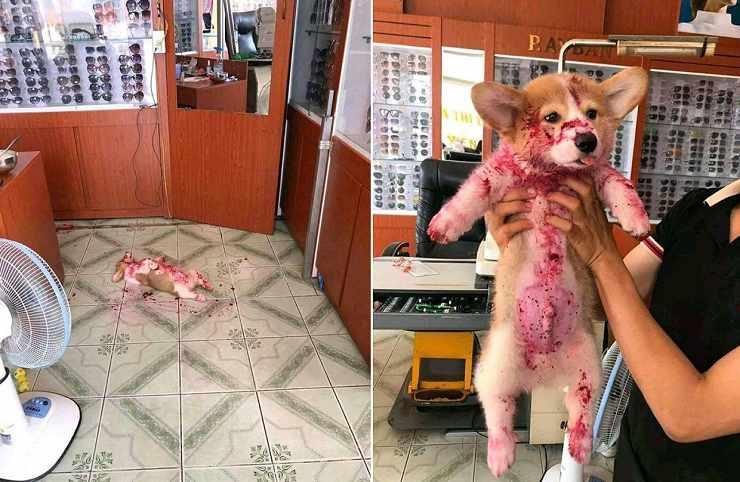 cucciolo sembra morto