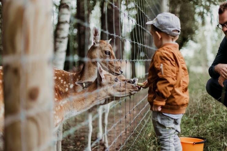 animali nello zoo