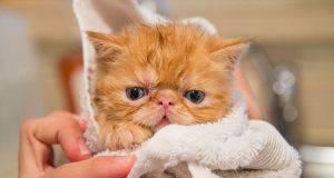 gatto triste bagno