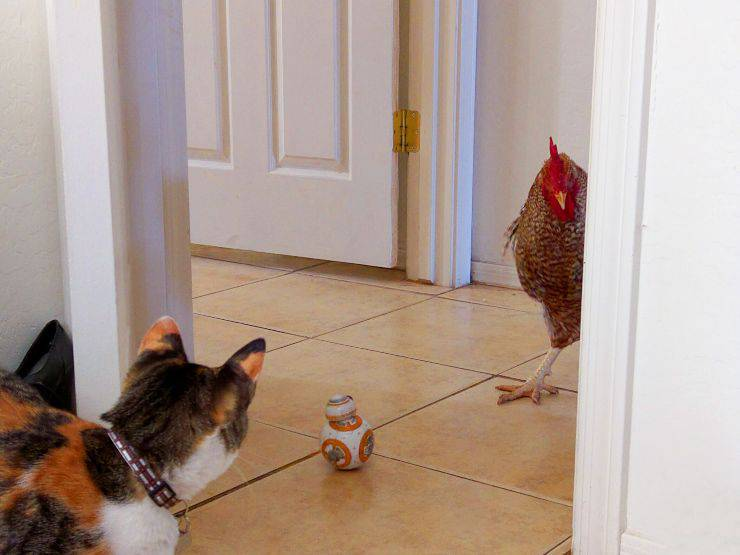 Animali domestici robot