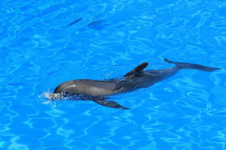 Animali che sanno nuotare