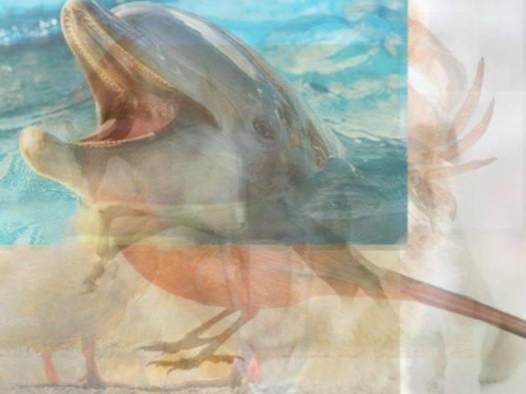 delfino animale vedi per primo