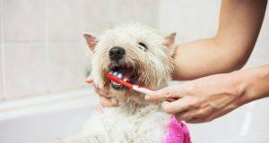dentifricio per cani fai da te