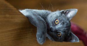 dimmi che gatto ti piace