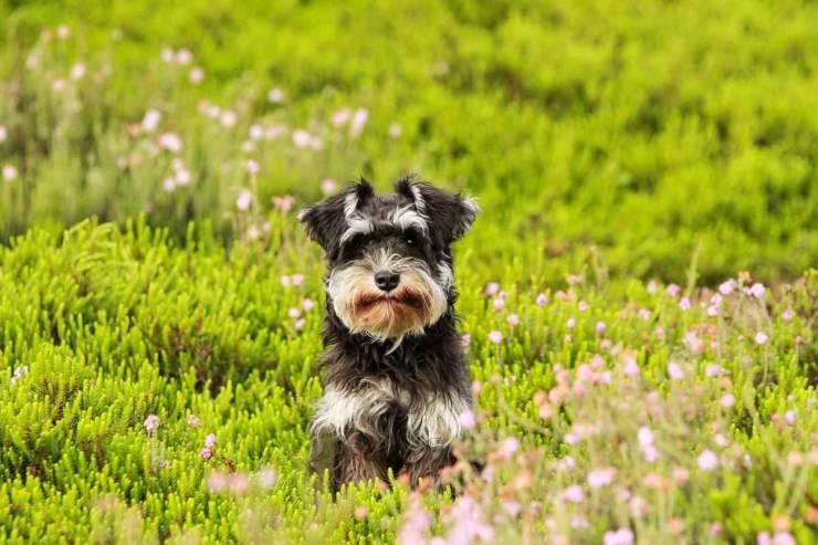 pericoli primavera cani gatti