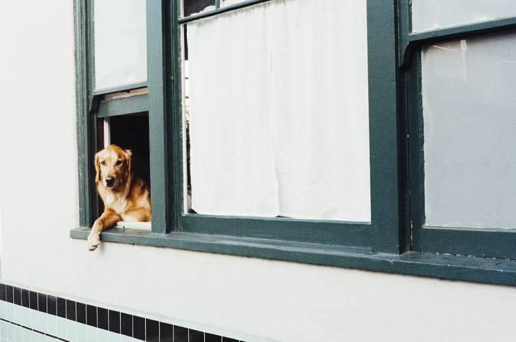 Il cane osserva dalla finestra (Foto Pixabay)