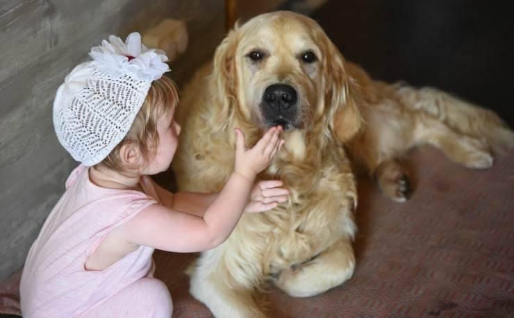 Il cane si lascia coccolare da una bambina (Foto Pixabay)