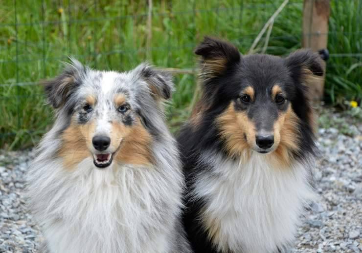 cani di diverse età