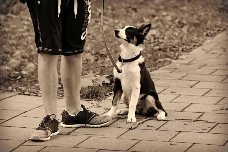 Il cane al guinzaglio (Foto Pixabay)