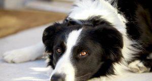 errori nella cura del cane