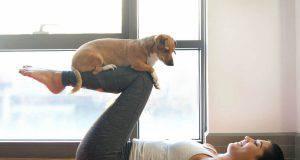 resto a casa sport giochi cane