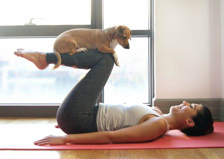 sport giochi casa cane