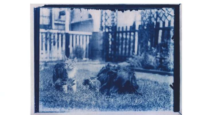 foto animali domestici