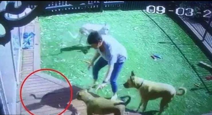 Donna salva i suoi cani
