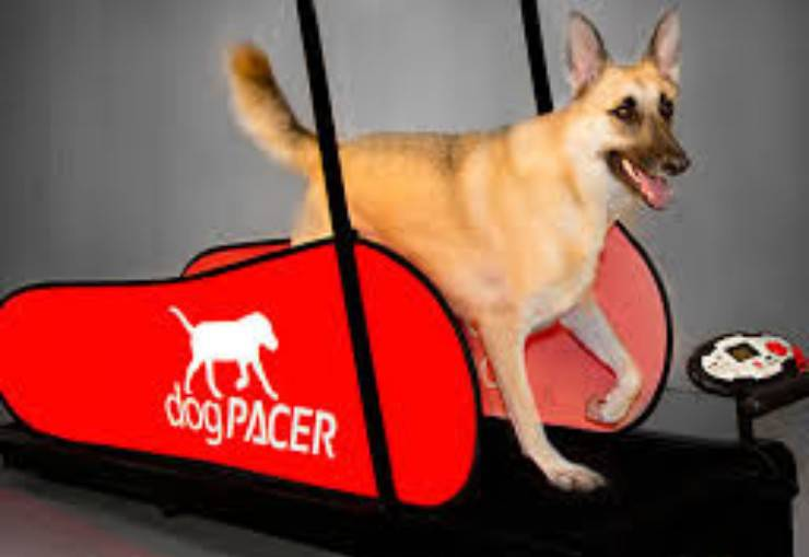 sport a casa cane