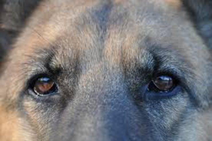 regolamento vieta cani in condominio