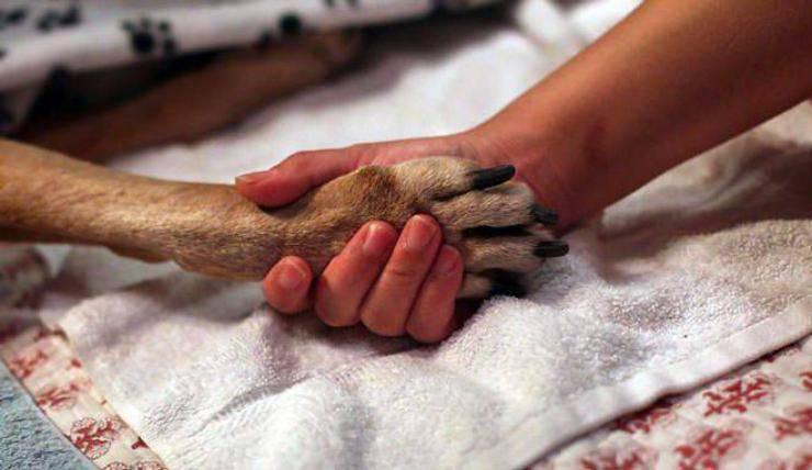 eutanasia cane proprietario deve assistere