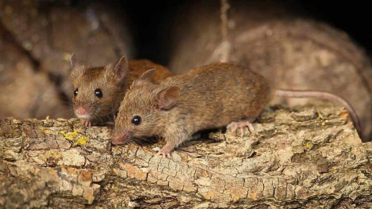 sognare topo topi significato sogno sogni