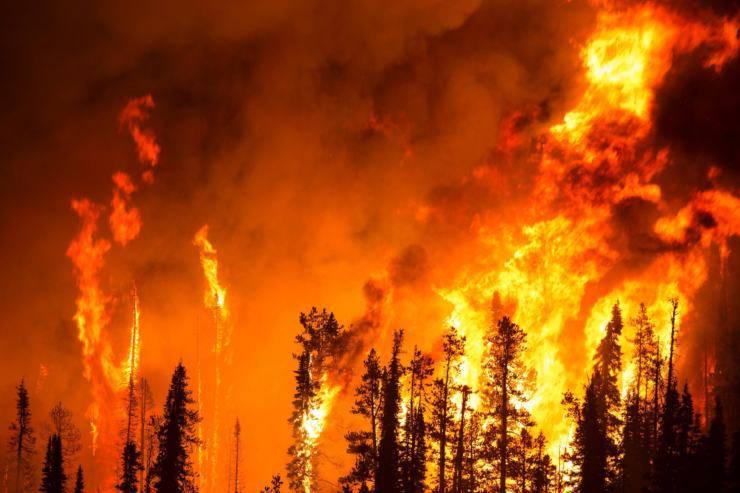 droni salvare animali incendi come funzionano